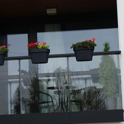 kwiaty w doniczce 2