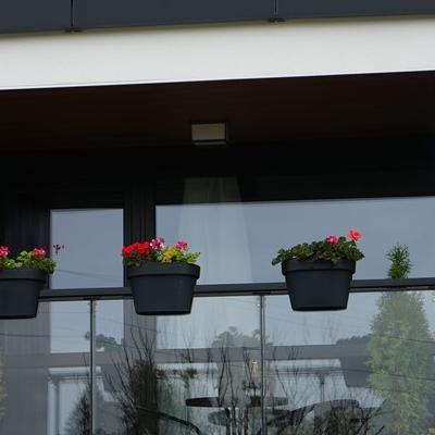 kwiaty w doniczce 1
